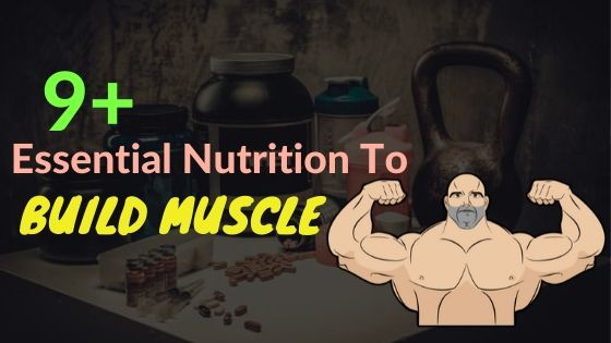 essential nutrition to build muscle
